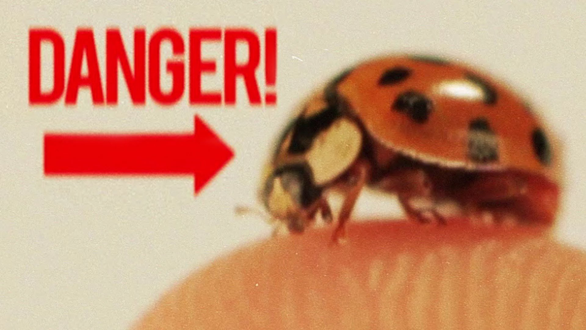 Unimaginable Facts about Lady Bugs