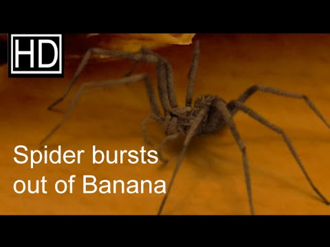 Spider jumps out of a banana