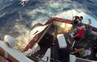 When Marlin fishing goes wrong