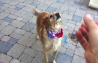 Funny dog learns catch