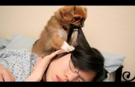 Dogs waking up their owners
