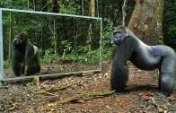 Wild animals and mirrors