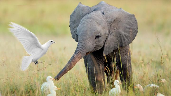 Baby elephant vs birds
