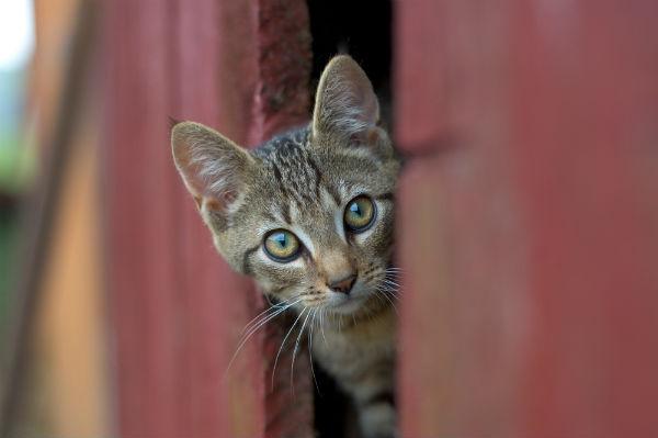Cat door fail