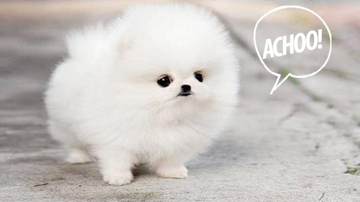 Hilarious puppy sneeze
