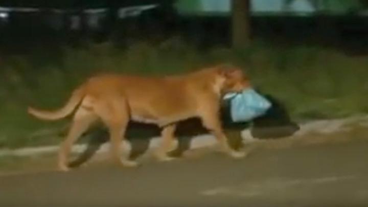 Amazing story about this Brazilian dog