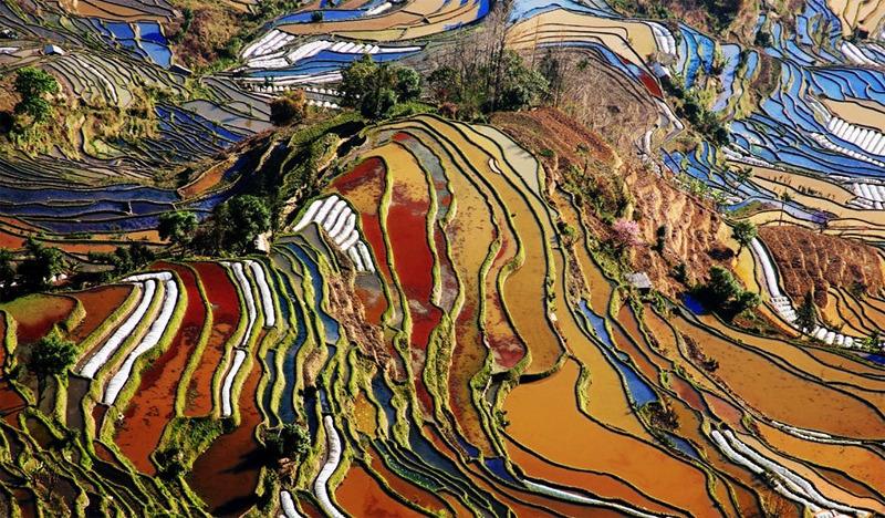 Yunnan_rice