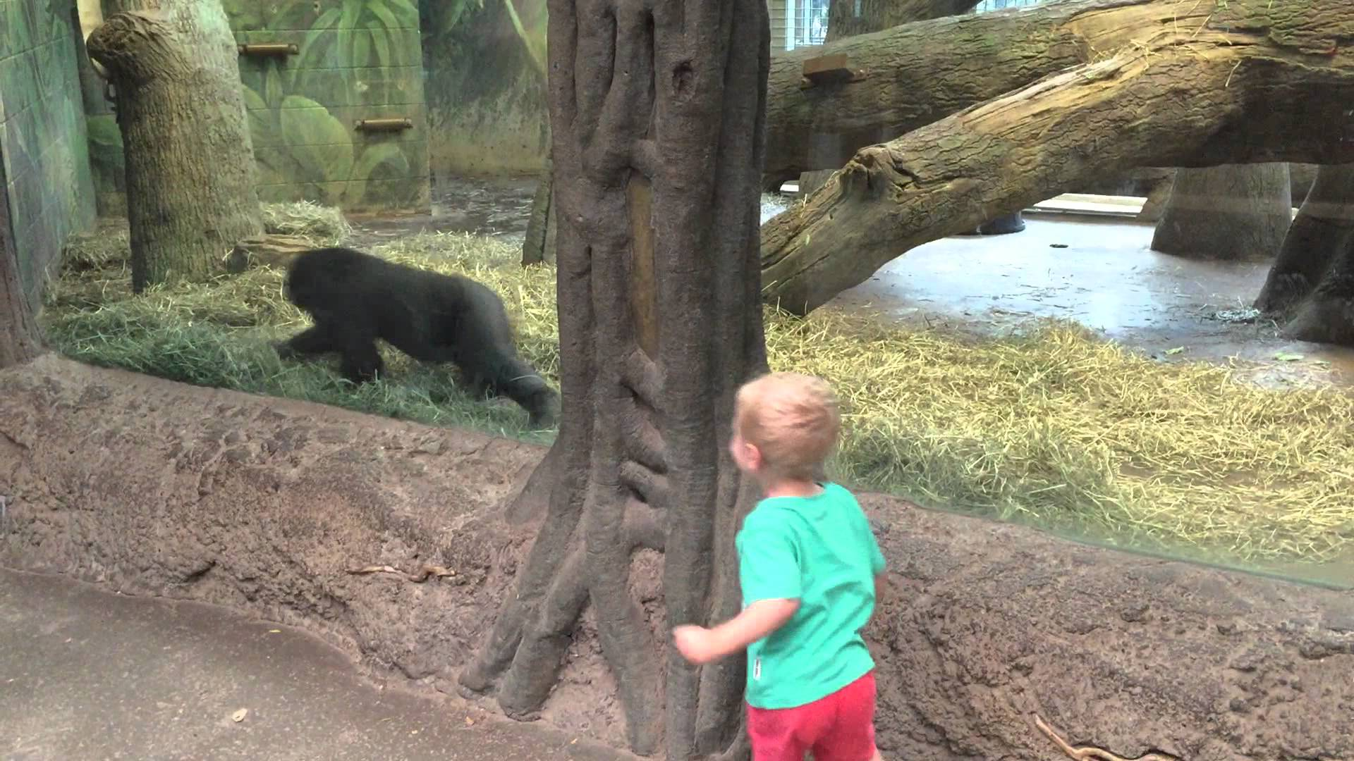 A kid playing with the baby gorilla
