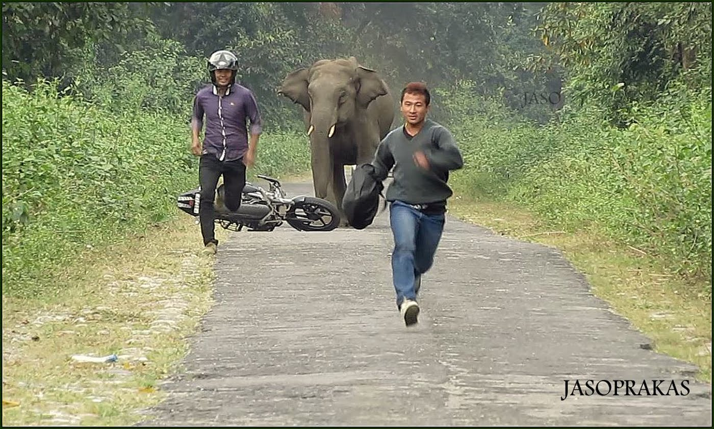 Bike riders chased by an elephant