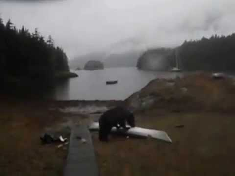 Black bear plays with a kayak