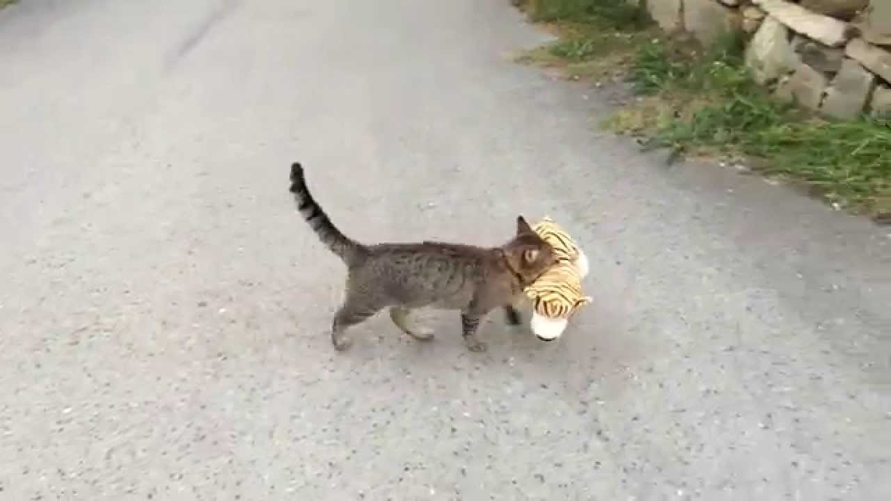 Cat borrows the neighbor's toy