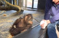 Zoo monkey watches a magic trick