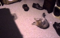 Kitty puts it in the shoe