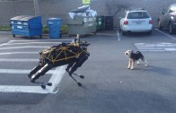 Robot vs Dog