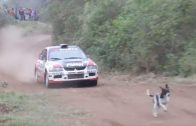 Rally driver saves a dog's life
