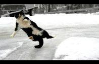 Funny animals on ice and snow