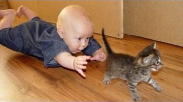 Cats Annoying Babies Compilation